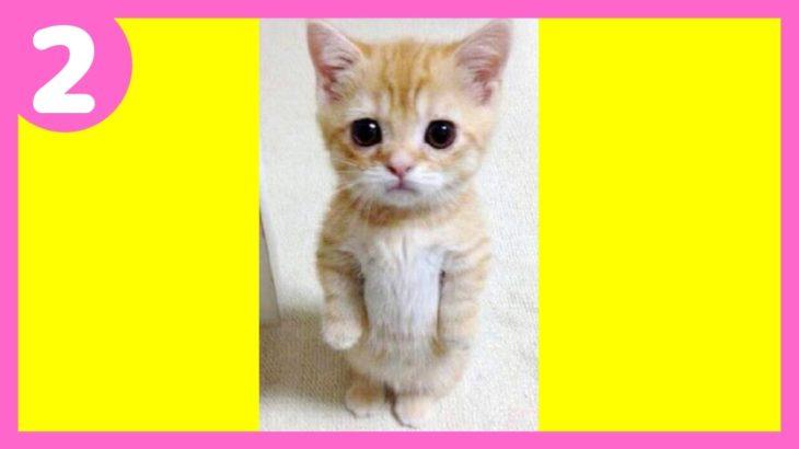 思わず笑ってしまう猫がカワイイ ネコの写真 cat画像
