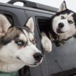 絶対笑う」最高におもしろ犬,猫,動物のハプニング, 失敗画像集 #26