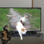 テレビから飛び出すねこ Cat jumped out from the TV