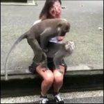 「絶対笑う」最高におもしろ犬,猫,動物のハプニング, 失敗画像集 #888🤣🤣