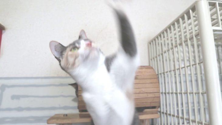 すごい動体視力!猫 cat meow ねこ