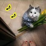 猫の気持ち・猫が玄関で出迎えてくれる5つの理由・招き猫ちゃんねる