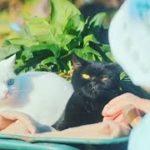 感動で泣けるCM 孤独を癒す猫物語