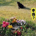 猫 感動 知恵袋・飼い主とペット一緒にお墓へ埋葬する霊園を発見(木葬の寺自然葬)墓守は7匹の猫たち・招き猫ちゃんねる