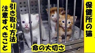 保護猫 里親・保健所にいる猫の引き取り方と注意すべきこと・この世から不幸な猫がいなくなりますように・招き猫ちゃんねる