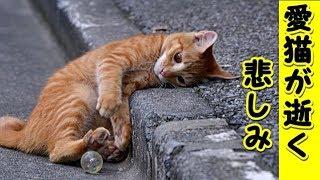 【猫 悲しい話】ペットを亡くした方がいたら、慰めてあげて下さい(猫 感動 泣ける話 保護 涙腺崩壊 感涙 動物 動画 里親)招き猫ちゃんねる