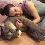 うちの猫はちょっと大きい😼 ピューマのメッシくんと家族の物語【PECO TV】