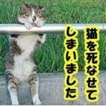 懺悔 飼い主失格・猫を飼うの初めての無知だった私は最愛の猫を死なせてしまいました・招き猫ちゃんねる