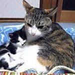 出産・産後の肥立ちが悪く初産だった母猫と子猫を死なせてしまった・招き猫ちゃんねる