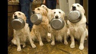 「絶対笑う」最高におもしろ犬,猫,動物のハプニング, 失敗画像集 #350