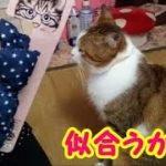 猫かわいい ダイソーで猫の可愛い首輪を買ってきた! 愛猫ボクちゃんにプレゼント・・・うちの猫ちゃんたちカワイイTV のコピー