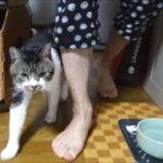 ニャーニャー喋りまくり猫の要望はいったい何!?甘えん坊猫リキちゃんの場合【リキちゃんねる 猫動画】Cat video キジトラ猫との暮らし