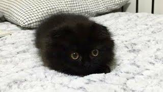 まっくろくろすけ!可愛すぎる黒猫が話題!