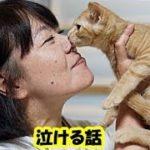 感動泣ける話・保護猫 預かりボランティアの話。迷い猫や身寄りのない猫を家に引き取り世話をする・招き猫ちゃんねる