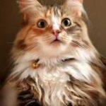 夕立ちに驚く猫