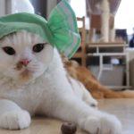 【マンチカンズ】ねこキャンディちゃん ~ cat candies ~