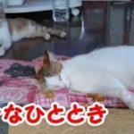 くつろぐ猫たち かわいい猫たちの幸せなひととき・・・うちの猫ちゃんたちカワイイTV