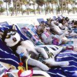 「絶対笑う」最高におもしろ犬,猫,動物のハプニング, 失敗画像集 #898🤣🤣