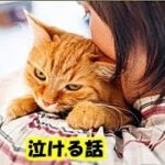 最期の時・愛猫のお別れの気持ちを表した姿に涙が止まらない・招き猫ちゃんねる