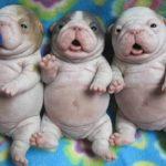 死ぬほどかわいい犬, 猫たち・最高におもしろ犬, 猫のハプニング, 動画集