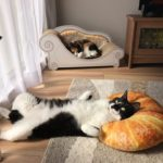 """猫ちゃんがニトリの「パン型クッション」が好き過ぎてヤバいw~The cat likes Nitori's """"pan type cushion"""" too much."""
