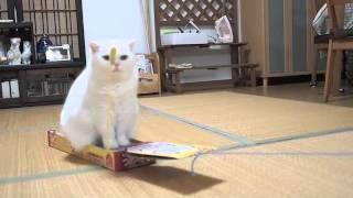 電車ごっこをする猫ちゃん Part2