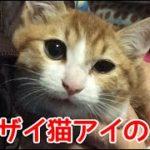 バンザイ猫アイちゃんの子猫時代。まだ半年経ってない頃の映像と写真を公開!!