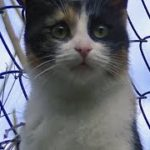 死んだ犬の傍を離れない猫 三毛ちゃんも泣かせます 子猫の頃から仲良しだった犬と猫