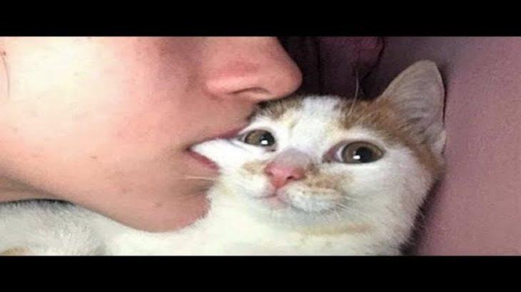 「絶対笑う」最高におもしろ犬,猫,動物のハプニング, 失敗画像集 #342