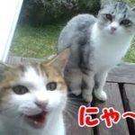 猫 鳴き声 呼ぶと可愛い声で返事するかわいい子猫! 仲良し野良の子猫 ・・・うちの猫ちゃんたちカワイイTV