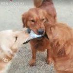 「面白い動物」あり得ないことをする犬, 猫・おもしろ犬, 猫のハプニング, 失敗集 #26
