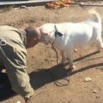 「面白い動物」あり得ないことをする犬, 猫・おもしろ犬, 猫のハプニング, 失敗集 #12