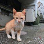 猫島で見掛けたカワイイ子猫