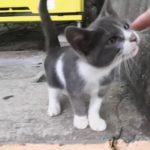 自販機の下に隠れる野良子猫がカワイイ