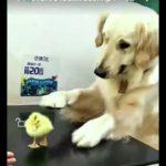 「面白い動物」あり得ないことをする犬, 猫・おもしろ犬, 猫のハプニング, 失敗集 #20
