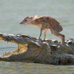 「泣ける感動動物」動物が異なる種の動物の命を救う時の瞬間