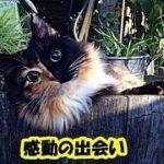 猫 泣ける話・子猫の頃にろくに食事も与えられず栄養失調から失明、そして邪魔者扱いされて捨てられた子猫・招き猫ちゃんねる