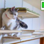 DIYで猫部屋の壁に手作りキャットウォーク part6 ついに完成し猫にお披露目!【Eng CC】