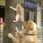 「面白い動物」あり得ないことをする犬, 猫・おもしろ犬, 猫のハプニング, 失敗集 #32