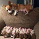 「面白い動物」あり得ないことをする犬, 猫・おもしろ犬, 猫のハプニング, 失敗集 #49