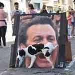「面白い動物」あり得ないことをする犬, 猫・おもしろ犬, 猫のハプニング, 失敗集 #44