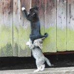 「猫かわいい」 すごくかわいい子猫 – 最も面白い猫の映画 #271