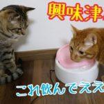 猫たちに自動給水機をプレゼントしたら警戒態勢にw