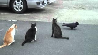 谷中猫400態-No376「カラスと猫」