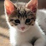 泣ける話 不思議猫・交通事故の子ネコの霊が成仏していくお話・招き猫ちゃんねる