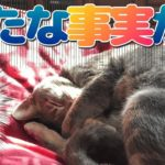 猫が誤飲【2】新たな事実発覚に愕然…