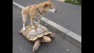 「絶対笑う」最高におもしろ犬,猫,動物のハプニング, 失敗画像集 #364