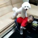 「面白い動物」あり得ないことをする犬, 猫・おもしろ犬, 猫のハプニング, 失敗集 #17