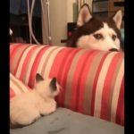 「絶対笑う」最高におもしろ犬,猫,動物のハプニング, 失敗画像集 #353