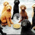 「面白い動物」あり得ないことをする犬, 猫・おもしろ犬, 猫のハプニング, 失敗集 #35
